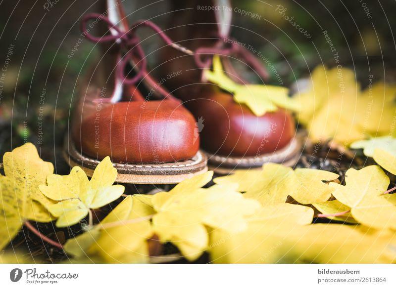 Kastanien-Schühchen im Herbstwald Freude Freizeit & Hobby Ausflug wandern Natur Erde Blatt Wald Wanderschuhe träumen herbstlich Schuhe gelb Stillleben