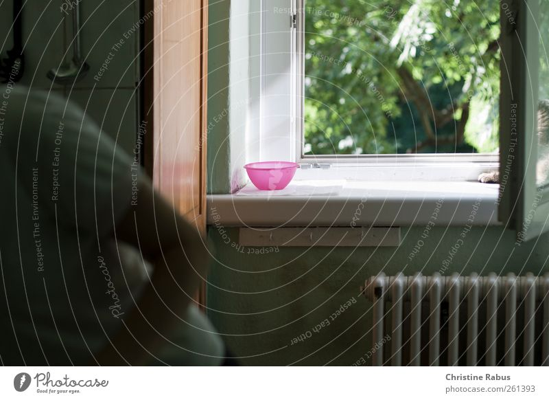 Hat die Katze Wasser? Tier ruhig Wohnung Zufriedenheit rosa Häusliches Leben Küche Kunststoff Haustier Geborgenheit Schalen & Schüsseln füttern bescheiden