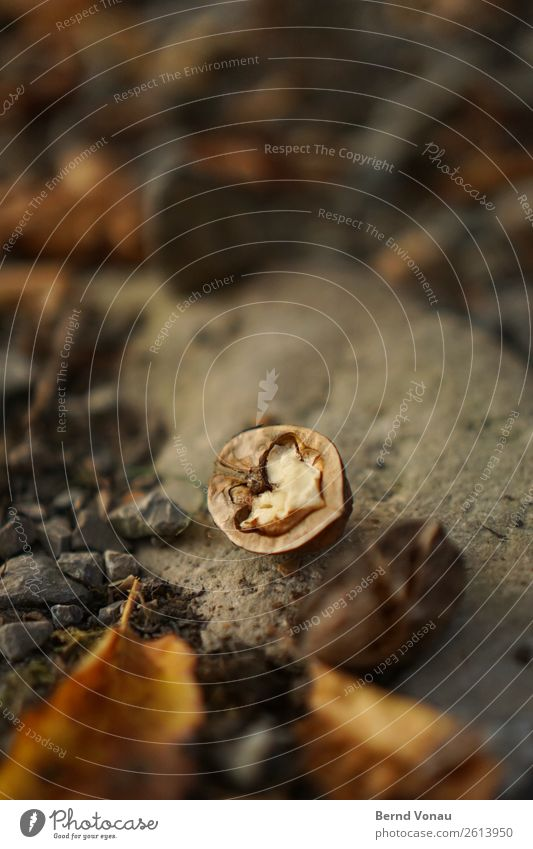 halboffen Umwelt Natur Herbst Wetter Feld hell Walnuss Frucht Ernte Schalenfrucht Stein Blatt braun Essen Herz Farbfoto Außenaufnahme Menschenleer Tag Licht