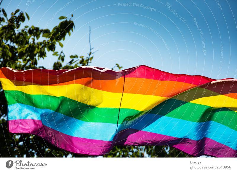 Regenbogenfarben Wolkenloser Himmel Sommer Schönes Wetter Baum Zeichen Streifen Fahne regenbogenfarben Regenbogenflagge leuchten ästhetisch außergewöhnlich