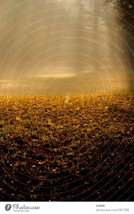 shining 2 Natur Landschaft Pflanze Erde Sonne Herbst Nebel Baum Laub Wiese Flußniederung Wege & Pfade Holz braun gelb gold schwarz Gefühle Lebensfreude Euphorie