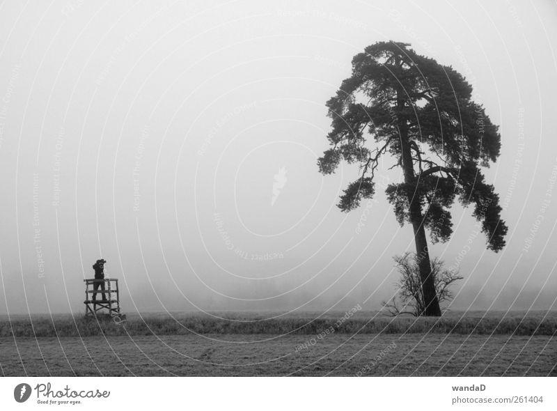 ________________ weiß schön Baum schwarz Einsamkeit ruhig Ferne Wiese Herbst kalt Landschaft grau Gras Luft Stimmung Feld