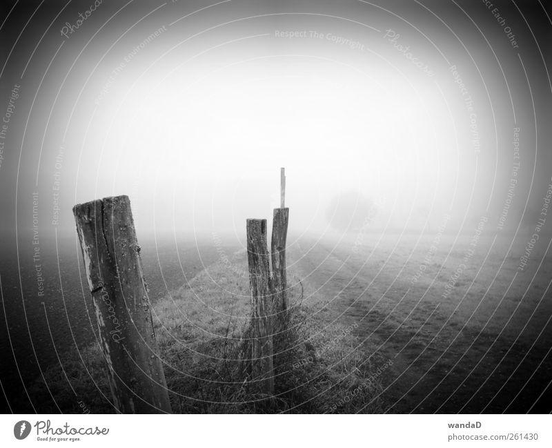 ________________ Himmel Natur weiß Einsamkeit schwarz ruhig Landschaft Wiese Freiheit Holz grau Traurigkeit Luft Stimmung Zeit Erde
