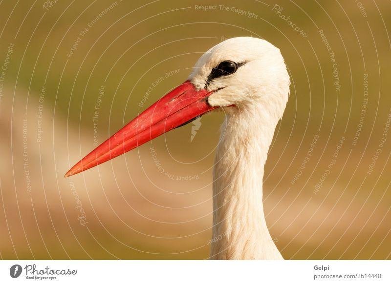 Porträt eines eleganten Storches auf natürlichem Hintergrund schön Freiheit Paar Erwachsene Natur Tier Wind Blume Gras Vogel fliegen lang wild blau grün rot