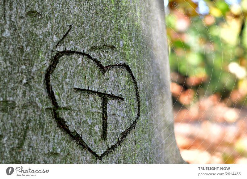'T' in Herz auf Baumrinde* Natur Sommer Herbst Schönes Wetter Park Wald Holz Zeichen Schriftzeichen Ornament Denken Liebe träumen authentisch frei