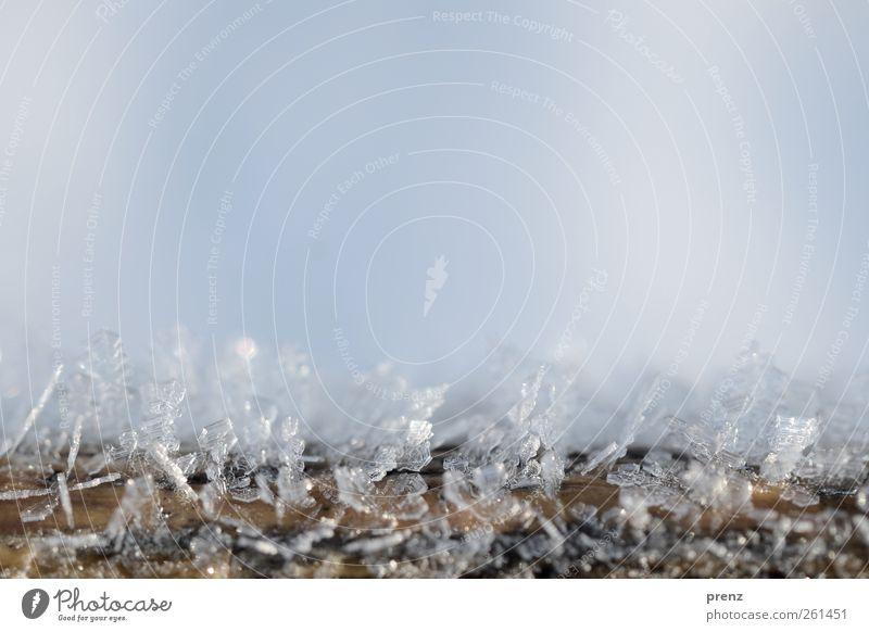 Eiszeit Natur Frost Holz blau weiß Eiskristall Nahaufnahme Makroaufnahme Winter kalt Farbfoto Außenaufnahme Menschenleer Textfreiraum oben Tag