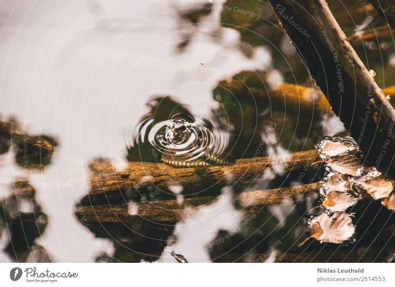 Wasserschlange Natur Herbst Sträucher Blatt Wildpflanze Wellen Seeufer Flussufer Tier Wildtier Schlange Tiergesicht Schuppen 1 Holz Schwimmen & Baden stehen