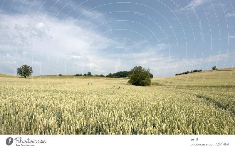 rural pictorial agriculture scenery at summer time Baum Sommer Wiese Landschaft Lebensmittel Gras Deutschland Hintergrundbild Feld Wachstum Sträucher einfach