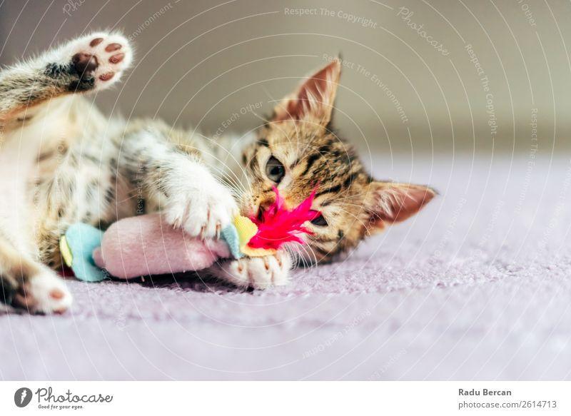 Niedliches Baby Katze spielt zu Hause Freude Spielen Tier Haustier Tiergesicht 1 Tierjunges Spielzeug klein lustig niedlich weiß Hintergrund Katzenbaby
