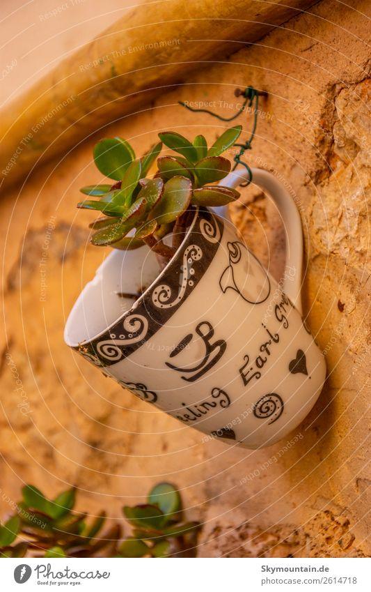 Morgen Kaffee mal anders - Pflanze in Tasse - Dekoidee Natur Blume Haus Tier Freude Umwelt Glück Kunst Fassade Häusliches Leben Design Zufriedenheit modern