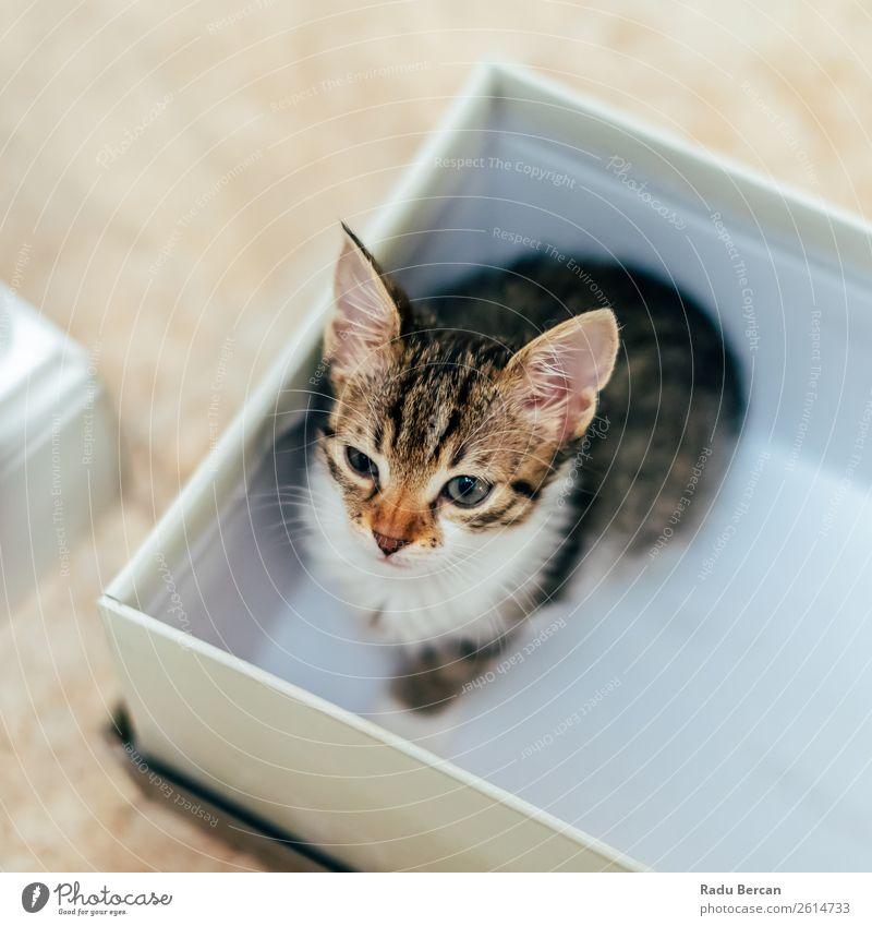 Katze Farbe schön weiß Haus Tier Tierjunges lustig klein braun grau sitzen niedlich beobachten Freundlichkeit Neugier