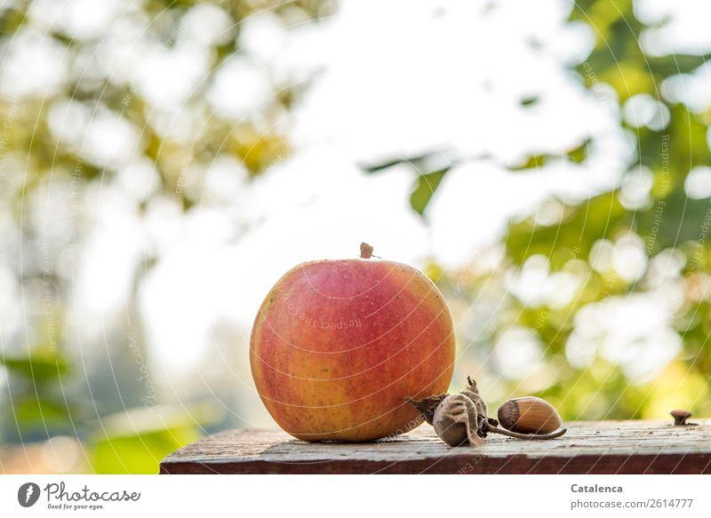 Apfel am Morgen Natur Pflanze Himmel Herbst Baum Blatt Frucht Haselnusskern Garten Schneidebrett Holz verführerisch fest schön lecker rund saftig braun gelb