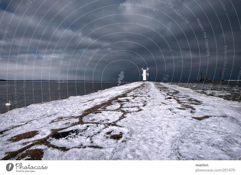Mole Gewitterwolken Winter Wetter Schnee Küste Ostsee Menschenleer Hafen Schifffahrt Schwan 1 Tier dunkel grau weiß Bake Seezeichen Gedeckte Farben
