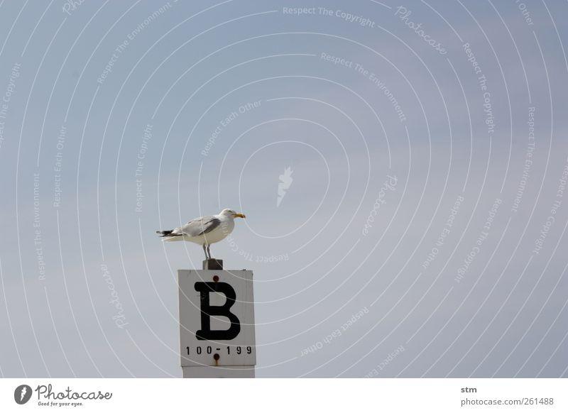 sehnsuchtsblau [beyond the sea 32] Himmel Ferien & Urlaub & Reisen Sonne Sommer Meer Strand Tier ruhig Ferne Freiheit Vogel warten Wildtier