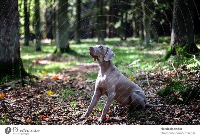Hast du etwas für mich? Jagd Ausflug wandern Natur Landschaft Erde Schönes Wetter Baum Park Wald Tier Haustier Hund beobachten Kommunizieren Spielen Freude
