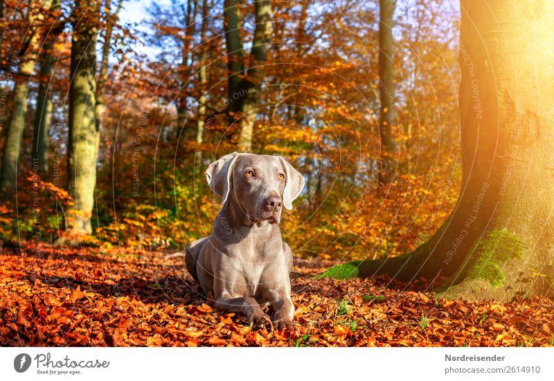 Herbstsonne genießen Ausflug Natur Landschaft Sonne Sonnenlicht Schönes Wetter Baum Park Wald Tier Haustier Hund beobachten wandern warten ästhetisch frei