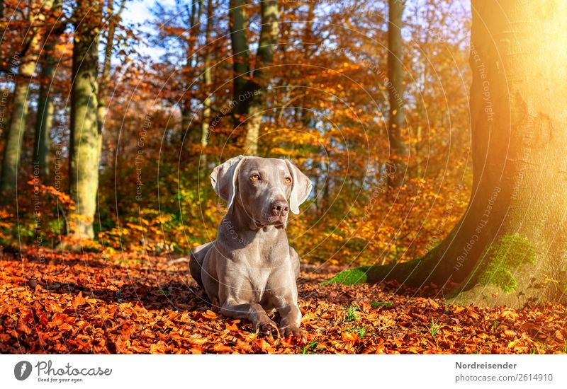 Herbstsonne genießen Natur Hund Landschaft Sonne Baum Tier ruhig Wald Leben Ausflug wandern Park frei ästhetisch Schönes Wetter