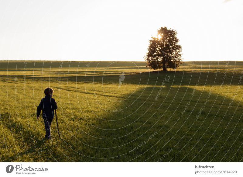 Kind, Weide, Baum, Gegenlicht, Abendstimmung, Herbststimmung Erholung Freizeit & Hobby wandern 1 Mensch 3-8 Jahre Kindheit Sonnenaufgang Sonnenuntergang