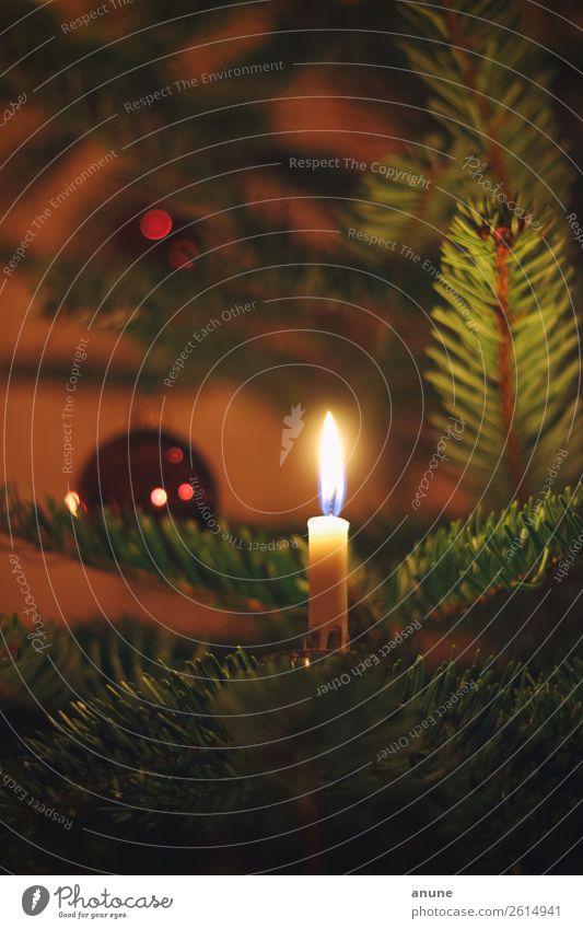 Echte Kerze am Weihnachtsbaum Häusliches Leben Wohnung Dekoration & Verzierung Feste & Feiern Weihnachten & Advent ästhetisch authentisch Duft historisch