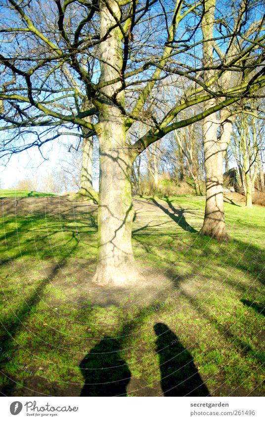 the tree of life. Mensch Himmel Natur blau grün Baum Farbe Winter Umwelt Wiese Leben Gras Frühling Wege & Pfade Paar Park