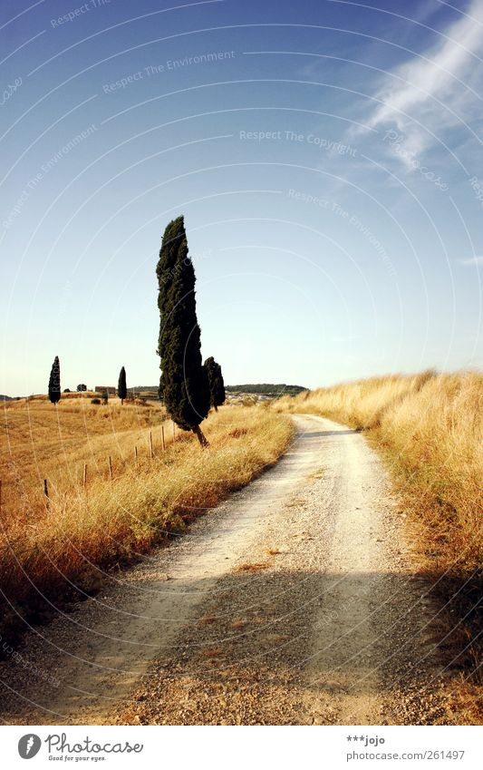 toskanische ansichten. Himmel blau Baum Ferien & Urlaub & Reisen Sommer Landschaft Wege & Pfade Wärme gold wandern Tourismus Hügel Idylle Italien Schönes Wetter Fußweg