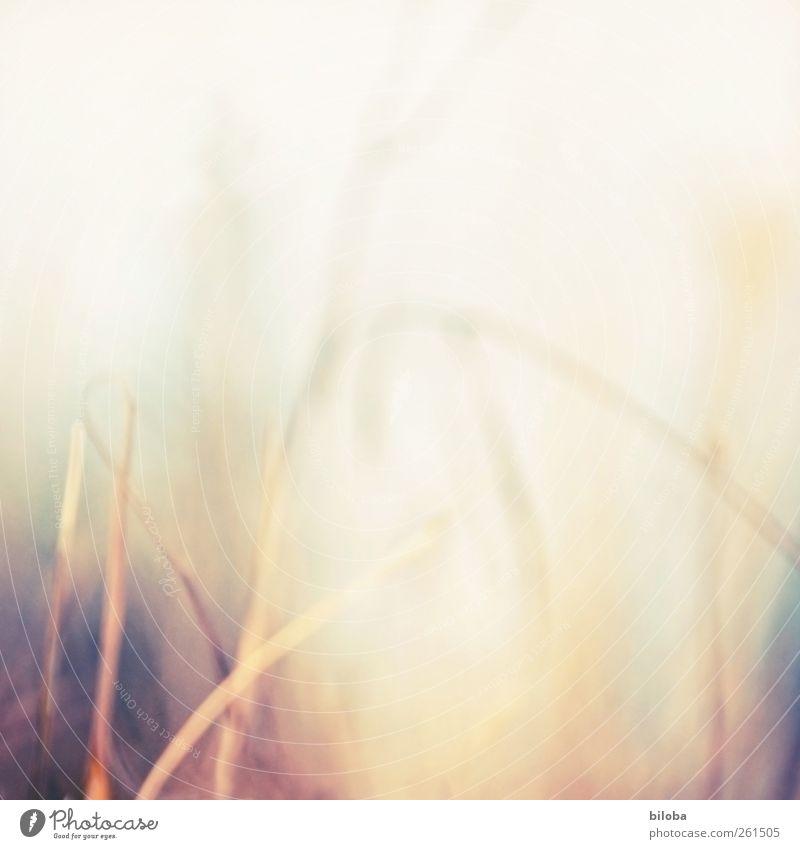Tag Traum Natur Pflanze ruhig gelb Umwelt Landschaft Gefühle Traurigkeit träumen Stimmung braun Hintergrundbild gold Hoffnung Trauer Neugier
