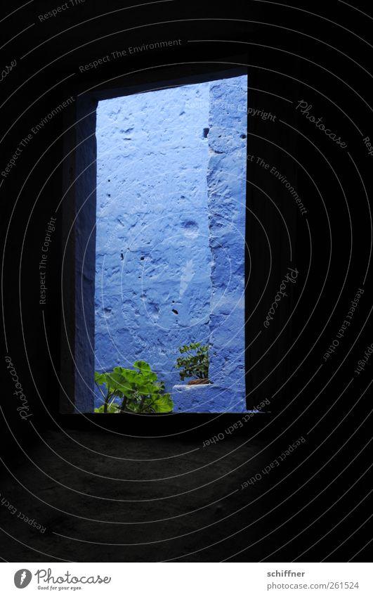 Blauer Ausblick blau Pflanze Farbe dunkel Fenster Wand Architektur Mauer Gebäude Fassade Bauwerk eng Pelargonie Blauton
