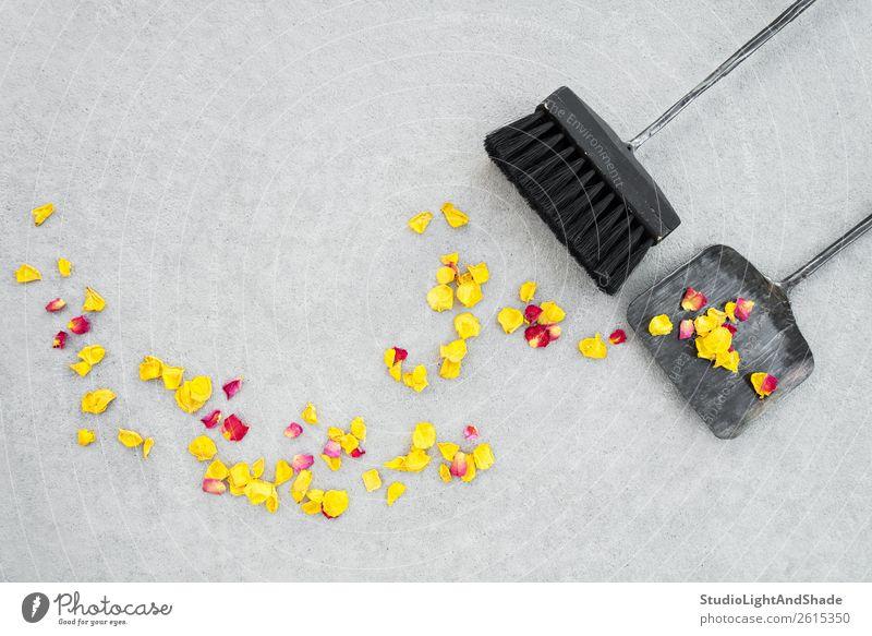 Natur alt Sommer Farbe schön rot Blume schwarz Herbst gelb Umwelt Blüte natürlich Garten Textfreiraum grau
