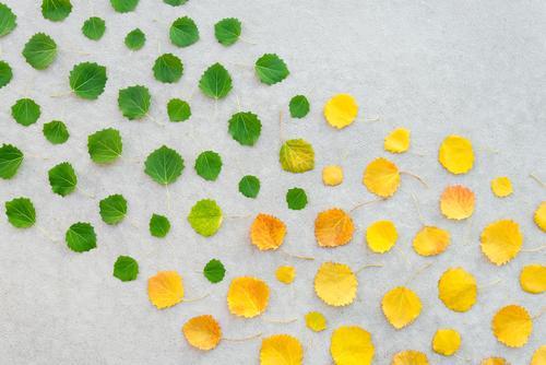 Natur alt Sommer Pflanze Farbe schön grün Baum Blatt Wald Herbst gelb Umwelt natürlich Kunst Garten