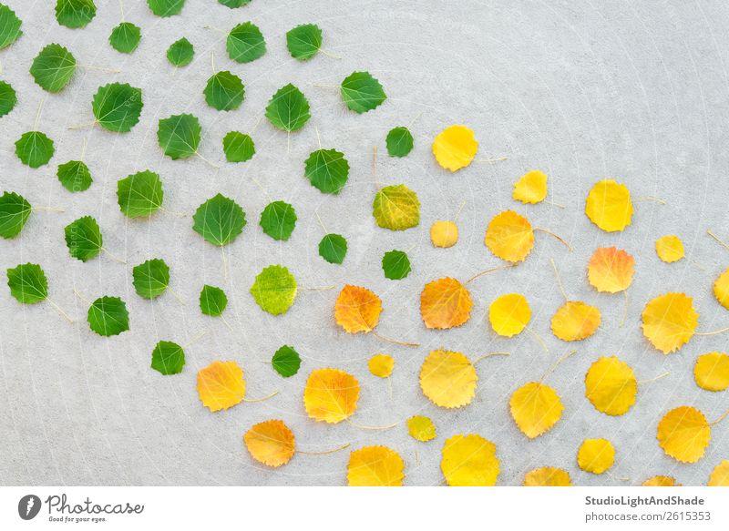 Wechsel der Jahreszeiten, Sommer- und Herbstlaub Design schön Garten Kunst Kunstwerk Umwelt Natur Pflanze Klima Klimawandel Wetter Baum Blatt Park Wald Beton