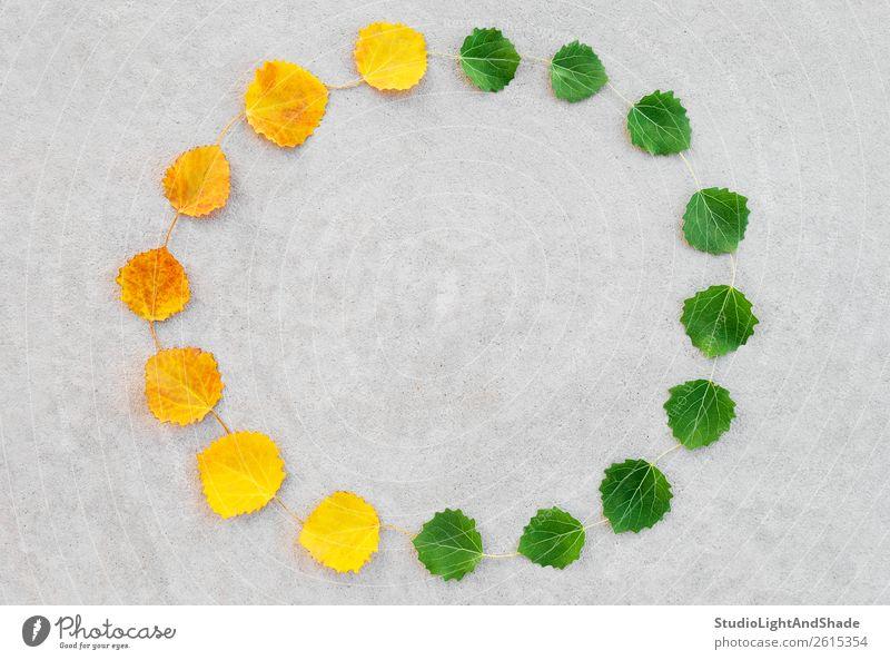 Der Wechsel der Jahreszeiten hinterlässt einen Kreis. Design schön Leben Sommer Uhr Kunst Kunstwerk Umwelt Natur Pflanze Herbst Klima Klimawandel Wetter Baum