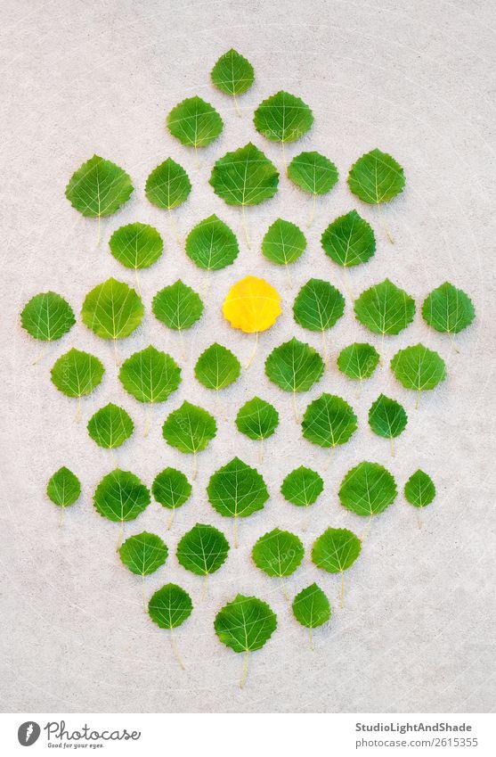 Ein Hauch von Herbst Design schön Leben Sommer Garten Kunst Kunstwerk Umwelt Natur Pflanze Klima Klimawandel Wetter Baum Blatt Grünpflanze Park Wald Beton alt