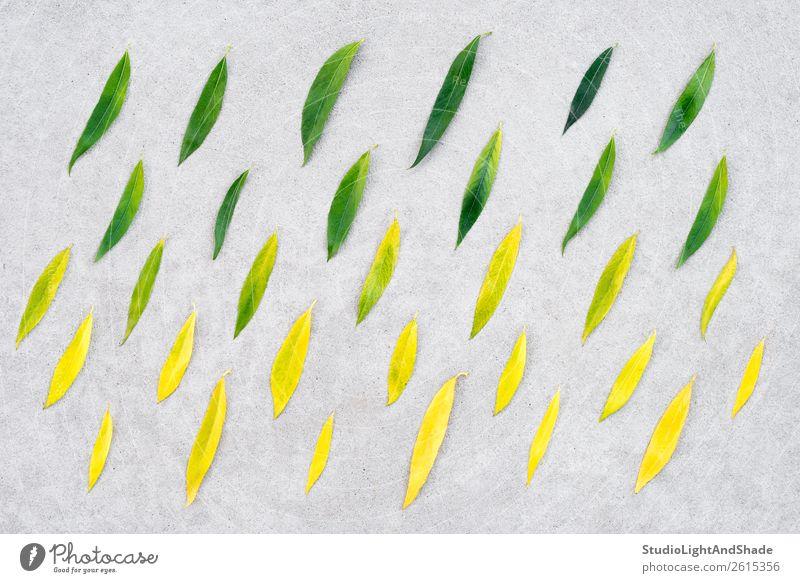 Wechsel der Jahreszeiten schön Sommer Garten Kunst Kunstwerk Umwelt Natur Pflanze Herbst Klimawandel Wetter schlechtes Wetter Regen Baum Blatt Grünpflanze