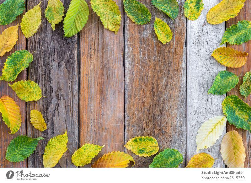 Rahmen aus hellen Herbstblättern auf altem Holzgrund Design schön Garten Dekoration & Verzierung Oktoberfest Erntedankfest Kunst Natur Pflanze Wetter Baum Blatt