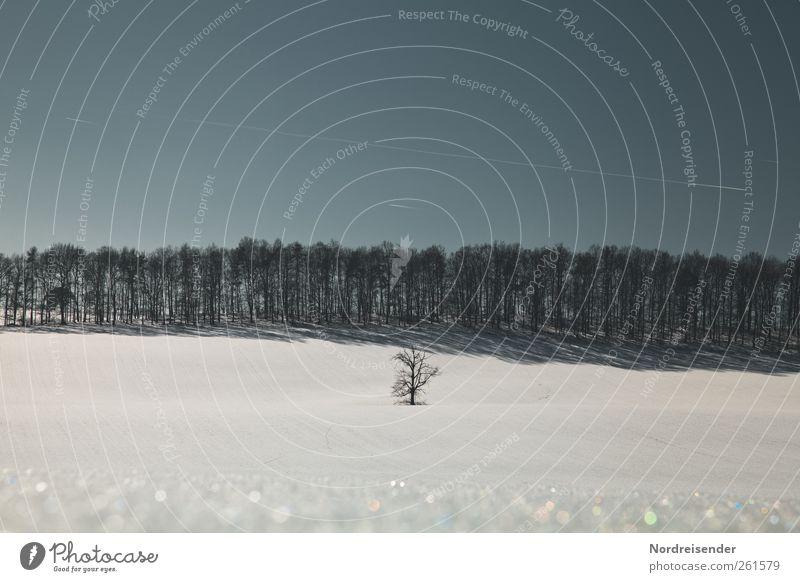 Der letzte Wintertag Himmel blau weiß Baum Pflanze Winter Einsamkeit ruhig Wald Erholung kalt Landschaft Schnee Linie Eis Feld