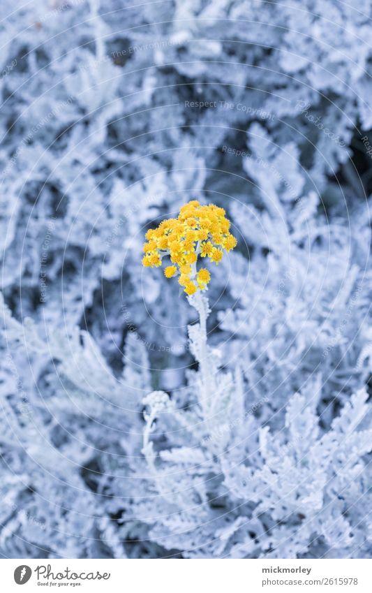 In der goldenen Mitte Natur Sommer Pflanze blau Farbe Erholung ruhig Leben gelb Umwelt Frühling Garten Park leuchten Wachstum