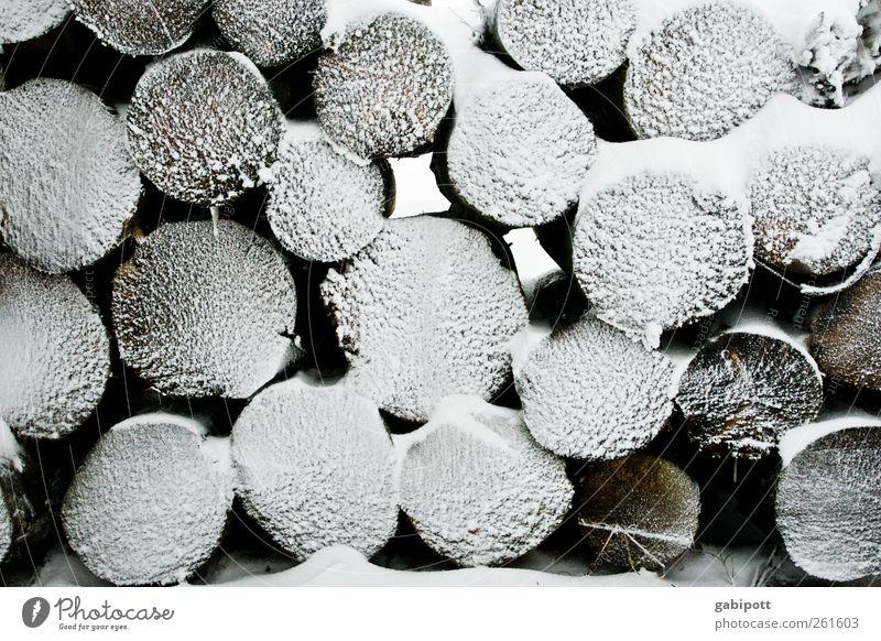 Baumloben | Ex-Bäume-loben Winter Schnee Schneefall Holz Häusliches Leben Brennholz Holzstapel Baumstamm kalt Stapel rund Reihe Gedeckte Farben Außenaufnahme