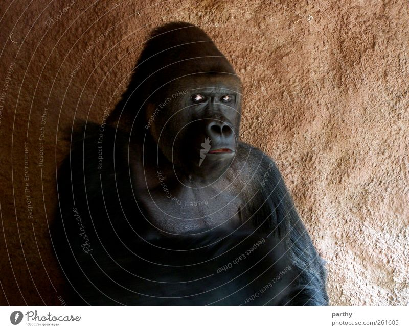 Stiller Beobachter Tier ruhig sitzen Wildtier Tiergesicht Zoo Misstrauen