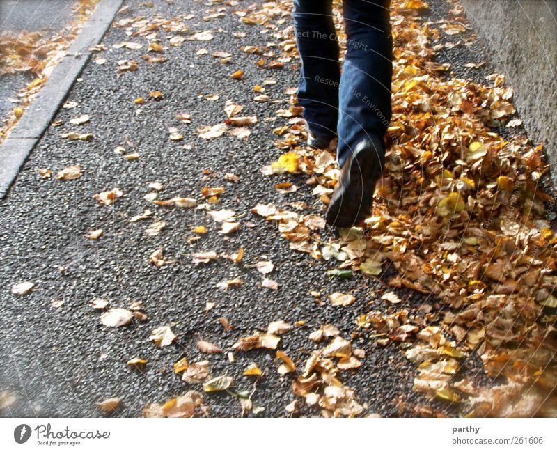 Quo vadis? Mensch Natur Jugendliche Erwachsene Herbst Fuß laufen maskulin 18-30 Jahre