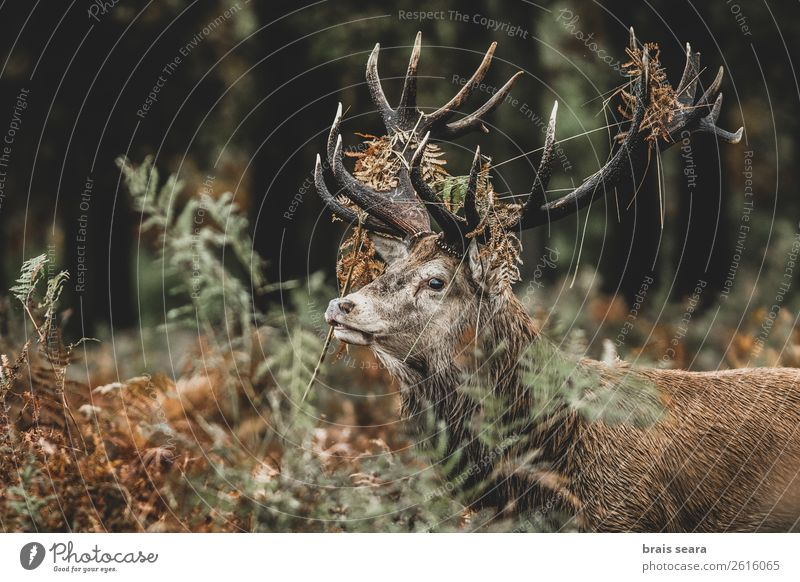 Natur Farbe grün rot Tier Wald dunkel Herbst gelb Umwelt Gras Erde braun wild maskulin Wildtier