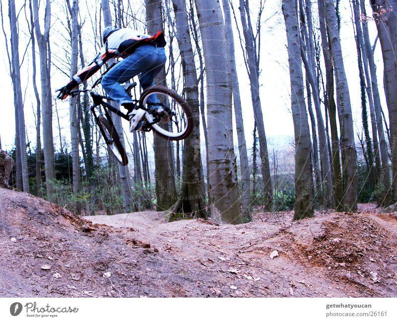 Tiefflug Fahrrad Wald springen Trick Geschwindigkeit Hügel Rampe Mut Baum Extremsport Dirt Bewegung Dynamik Erde Bodenbelag Luftverkehr Außenaufnahme