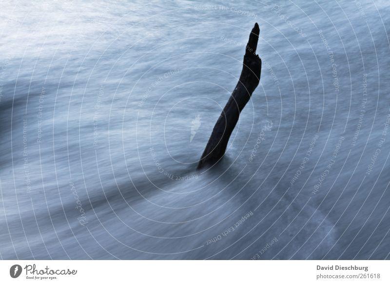 Standhaft ruhig Natur Wasser Winter Bach Fluss blau schwarz weiß Ast Strömung Bewegung standhaft kalt Wasseroberfläche Farbfoto Außenaufnahme Detailaufnahme Tag