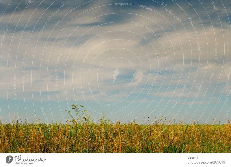 Sommer Himmel Wolken ruhig Herbst Landschaft Freiheit Gras Horizont Zufriedenheit Feld natürlich Romantik Schönes Wetter Jahreszeiten Wolkenhimmel