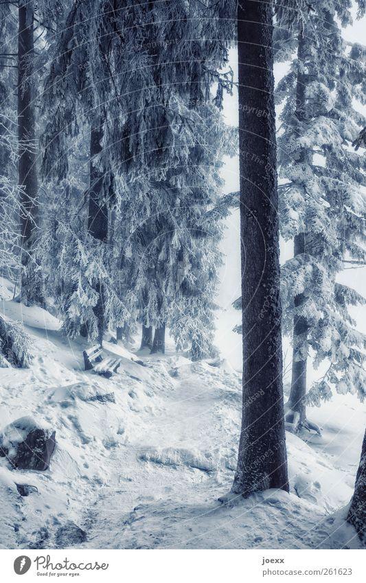 Stammbaum Natur Winter Schnee Baum Park Wald Wege & Pfade groß hell kalt blau schwarz weiß ruhig Idylle Pause Umwelt Schneelandschaft Bank Baumstamm Nadelwald