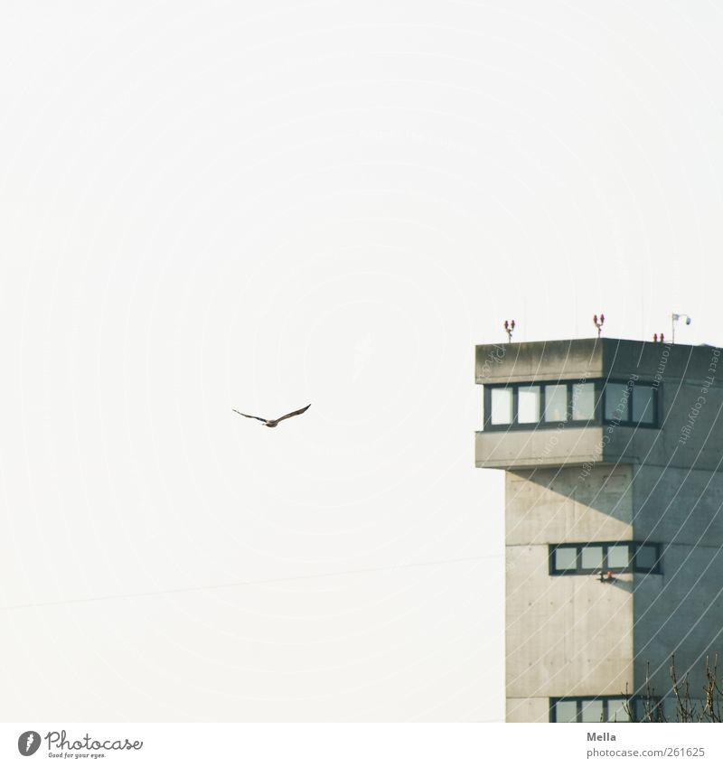 Anflug Umwelt Luft Himmel Flughafen Hafen Bauwerk Gebäude Flugplatz Tower (Luftfahrt) Tier Vogel Bussard 1 fliegen frei lustig natürlich Freiheit Kontrolle