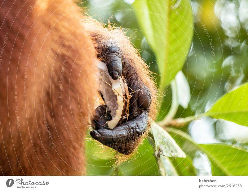 verletzt Ferien & Urlaub & Reisen Natur Hand Baum Tier Blatt Ferne Tourismus außergewöhnlich Freiheit Ausflug Wildtier Abenteuer Finger fantastisch Asien