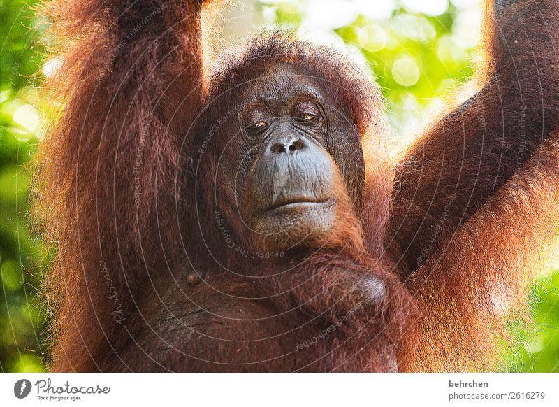geschichten erzählen... Ferien & Urlaub & Reisen schön Tier Ferne Traurigkeit Tourismus außergewöhnlich Freiheit Ausflug nachdenklich Wildtier Abenteuer