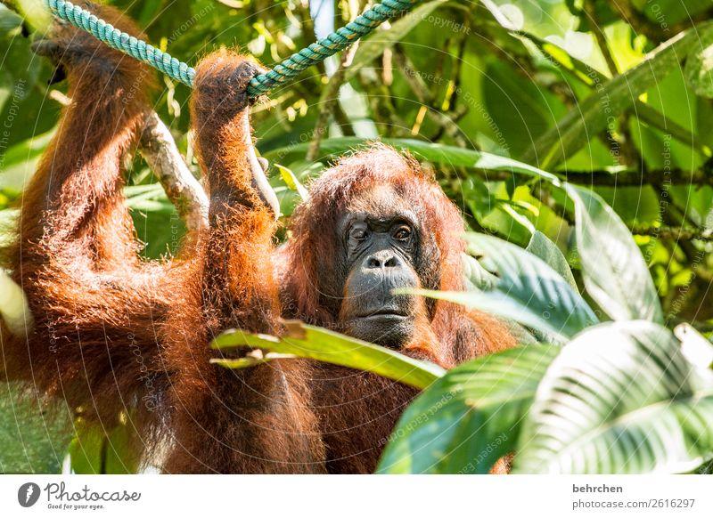 wochenende zu ende Ferien & Urlaub & Reisen schön Tier Ferne Tourismus außergewöhnlich Freiheit Ausflug nachdenklich Wildtier Abenteuer fantastisch Asien Fell