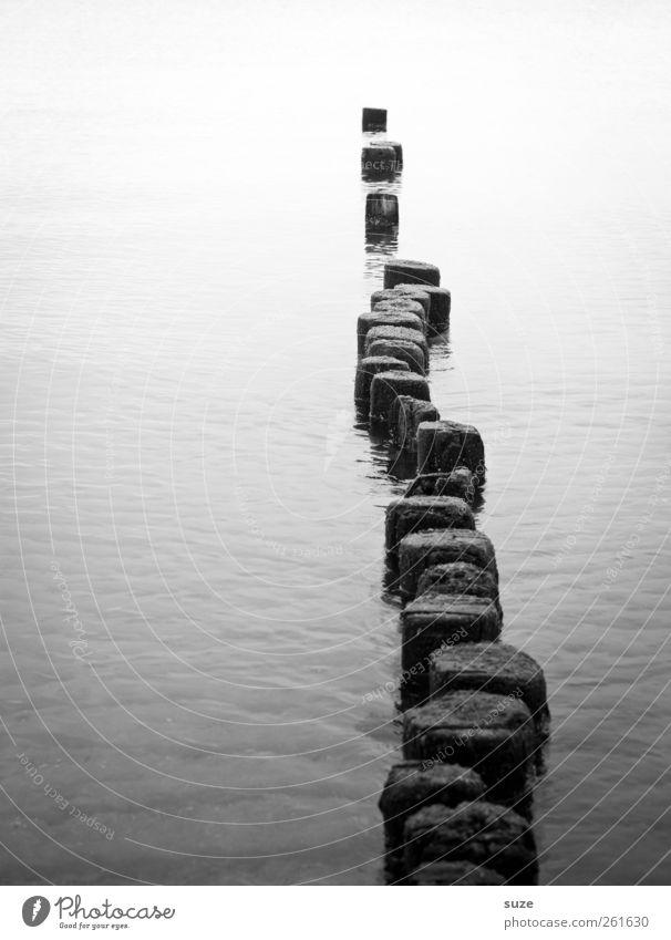 Pfadfinder ruhig Meditation Meer Umwelt Natur Urelemente Wasser Ostsee Wege & Pfade Holz ästhetisch Unendlichkeit kalt Einsamkeit Gelassenheit Ziel Buhne