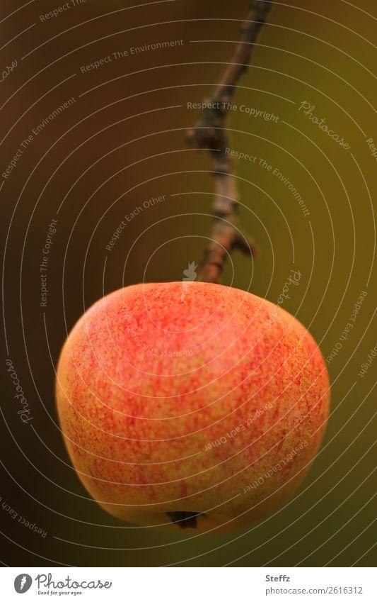 Ein Apfel am Tag Lebensmittel Frucht Ernährung Bioprodukte Vegetarische Ernährung Diät Vegane Ernährung Natur Herbst Garten hängen Wachstum Gesundheit lecker